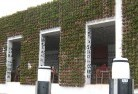 Akaroa Green walls 3