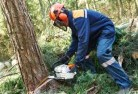 Akaroa Tree cutting services 21