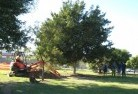 Akaroa Tree lopping 15