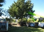 Tree Lopping Landscaping Solutions