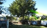 Landscaping Solutions Tree Lopping